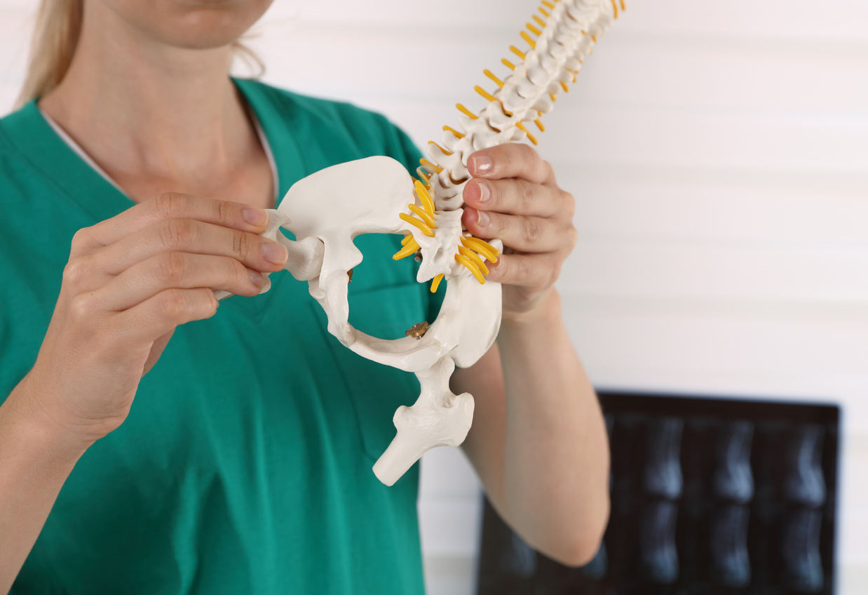 Hip joint pain. Doctor physiotherapist holding human spine model